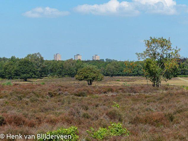 Hoorneboegse heide bij Hilversum