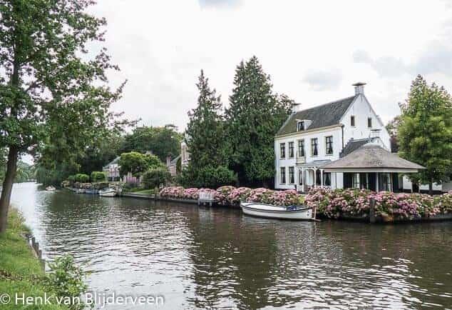 Typerende hortensia's langs de Utrechtse Vecht