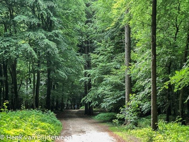 Statige bossen langs de Postweg
