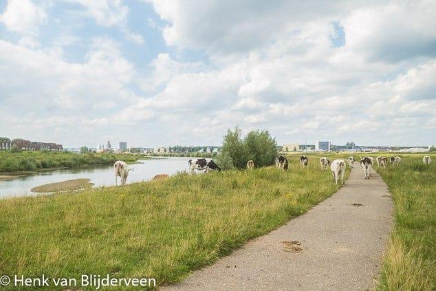 Stad en natuur raken elkaar