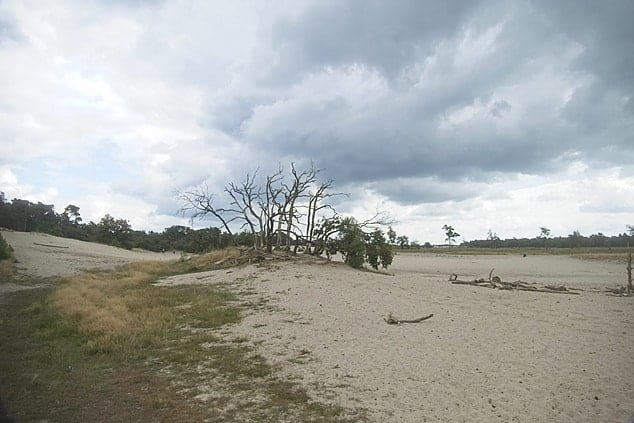 Loonse duinen Noord Brabant